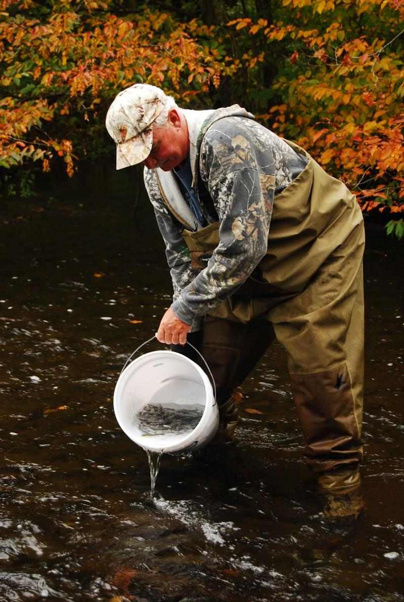 Volunteers introduce Atlantic salmon fingerlings to Salmon River tributary