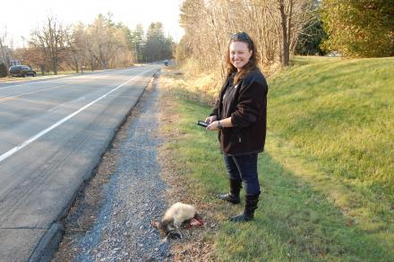 Danielle Garneau enters data about a dead skunk on Route 22B outside of Plattsburgh.