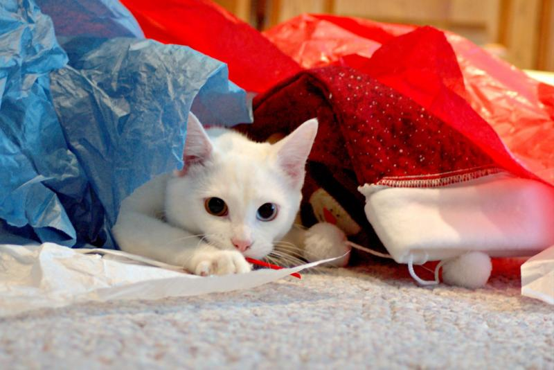 While cats may love tissue paper, recycling centers do not.