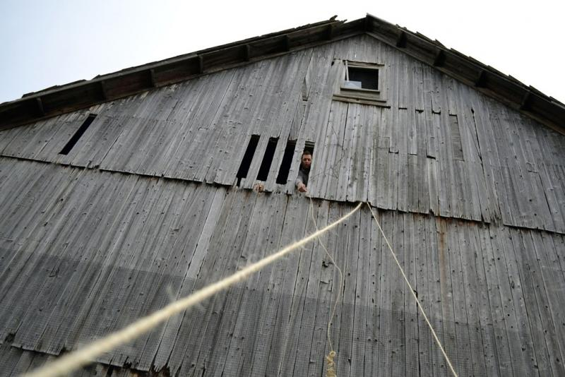 Dave Pasick sticks his head out of the barn on Szaro Farms outside of Utica, N.Y.