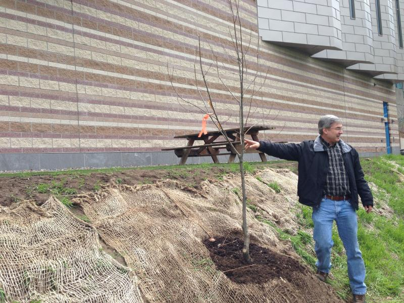 SUNY ESF professor Bill Powell at the planting of an American chestnut tree on the campus