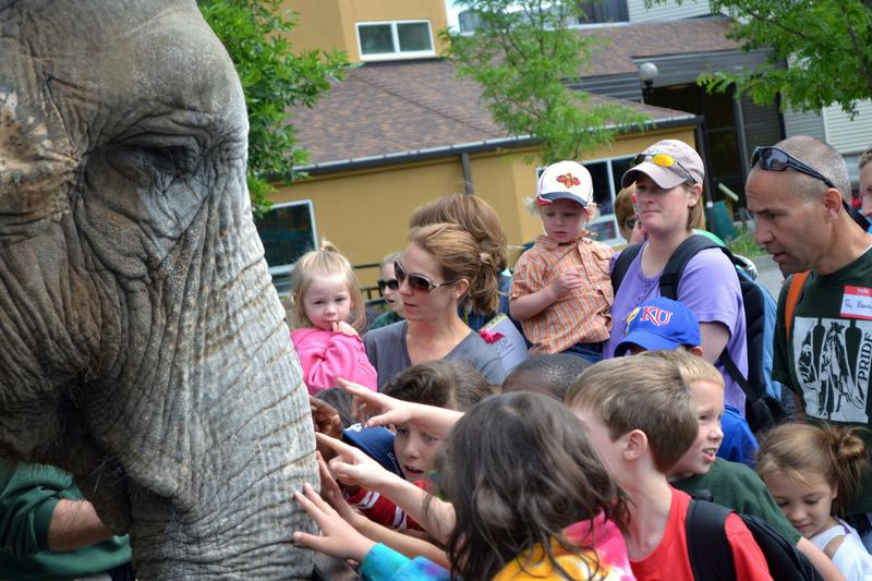 Children pet Siri, one of the Rosamond Gifford Zoo's Asian elephants, at the opening of a new animal encounter.