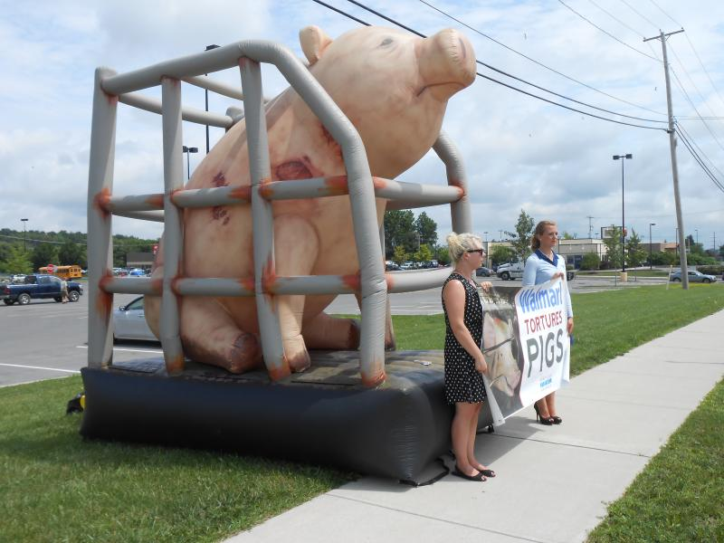 Crystal Gordon and Jeni Haines, animal welfare activists with the L.A.-based Mercy For Animals, demonstrate outside Watertown's Walmart store Monday morning.