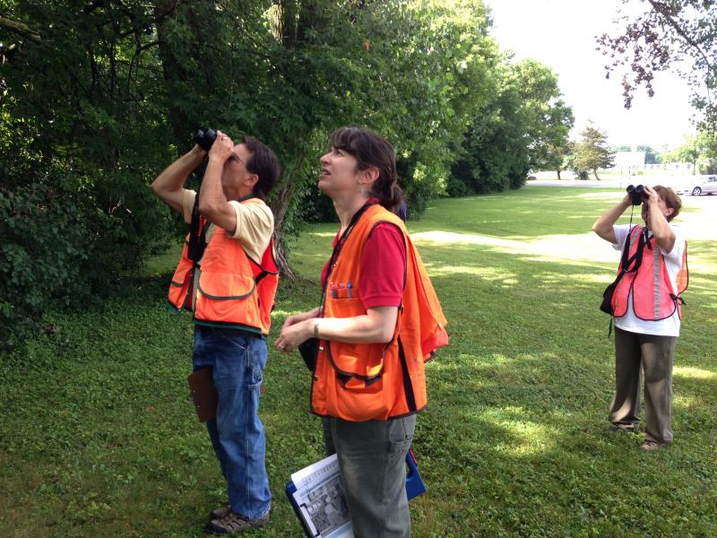 "Volunteers are taught what to look for when examining trees for the ""big three"" invasive forest pests."