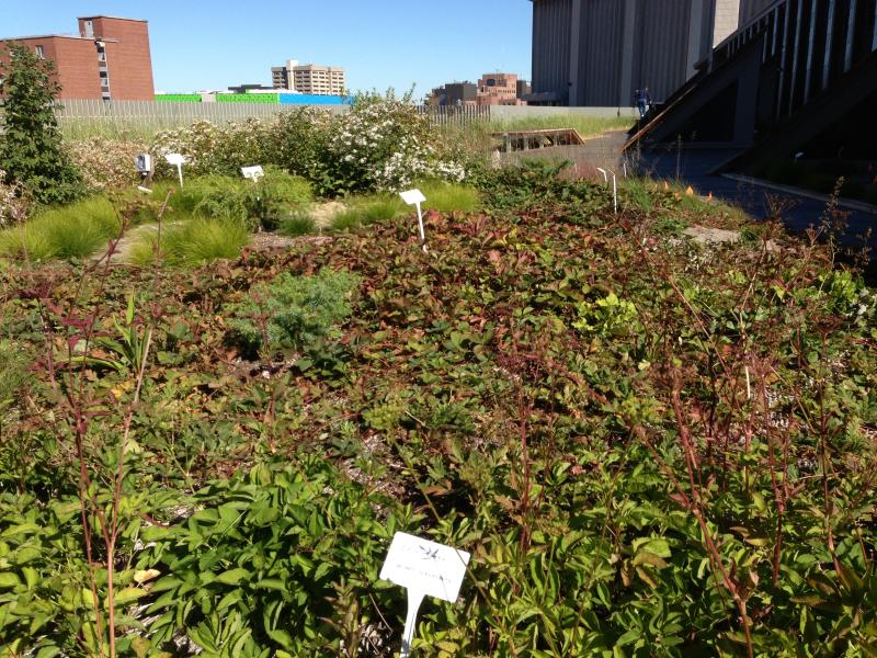 A roof garden sits on top of the welcoming center.