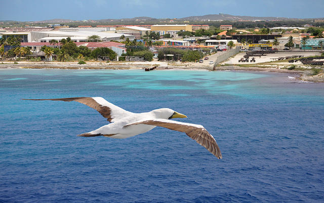 The coast of Aruba.