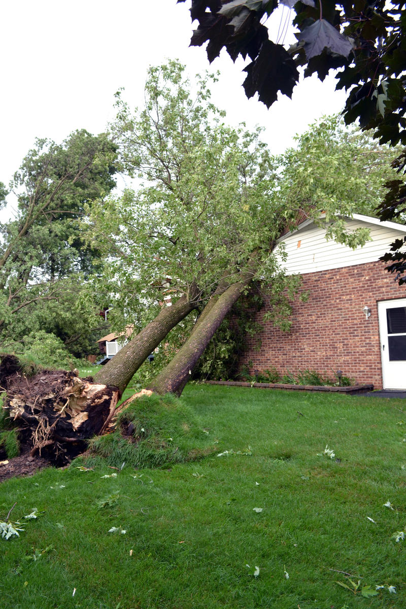 An uprooted tree on East Heman St. in East Syracuse after powerful storms tore through the village Tuesday.