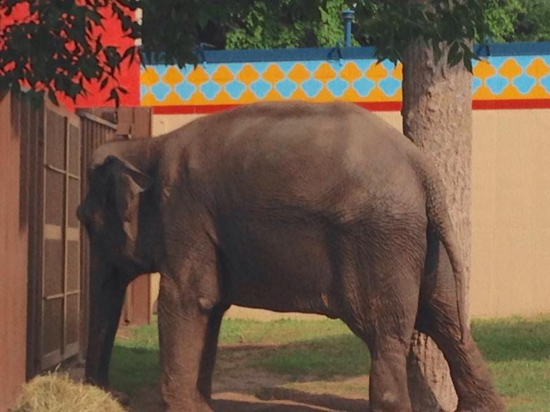 An elephant poses for a photo at the Rosamond Gifford Zoo in Syracuse.