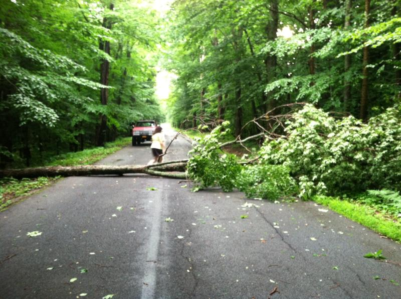 A tree lays across Gray Road in Minetto