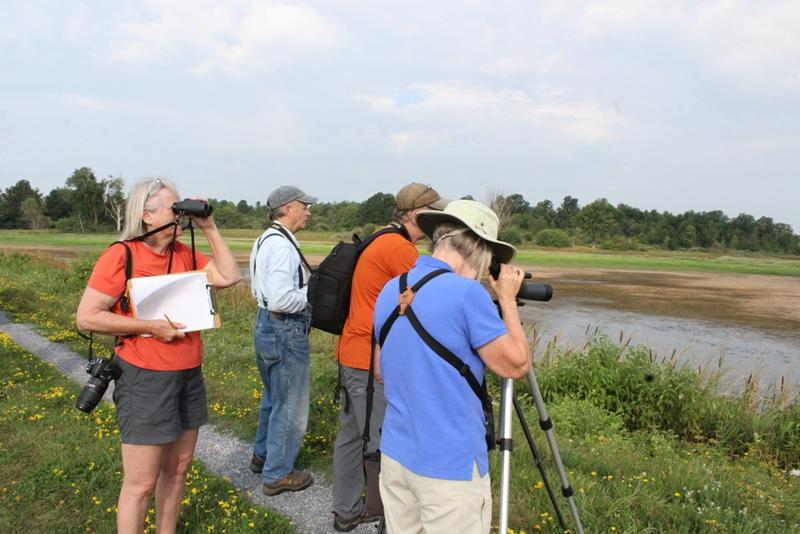 The North Leeds Birders from Kingston, Ontario relish in the chance to identify up to 17 different species of shorebirds.