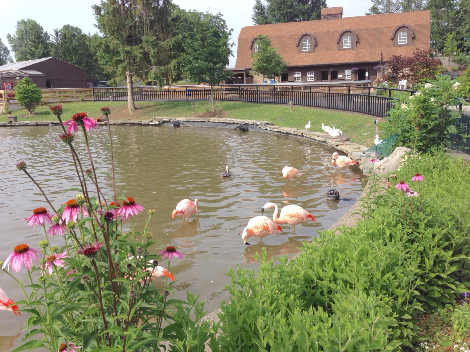 syracuse s rosamond gifford zoo celebrates 100 years wrvo public media