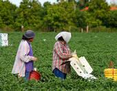 Conditions for Migrant Farmer Works Gets Scrutiny