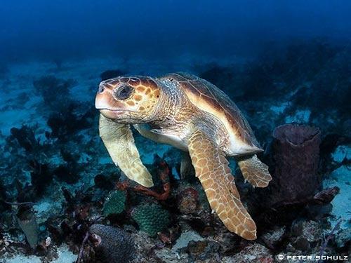 rare loggerhead sea turtle eggs found in fenwick island