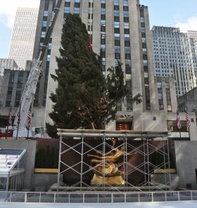 FILE- In this Nov. 8, 2013 file photo, the Rockefeller Center Christmas Tree is raised and moved from Shelton, Connecticut to its pedestal in New York City's Rockefeller Center.