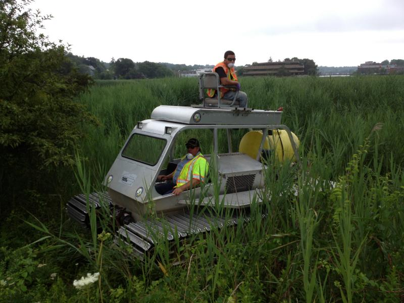 DEEP workers on the Marsh Master, a vehicle used to navigate through tall, dense phragmites reeds.