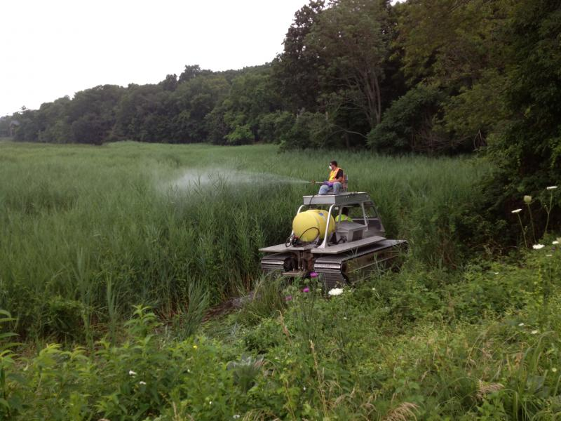 DEEP workers spraying phragmites with herbicide at the Taylortown Salt Marsh in Wesport, Conn.
