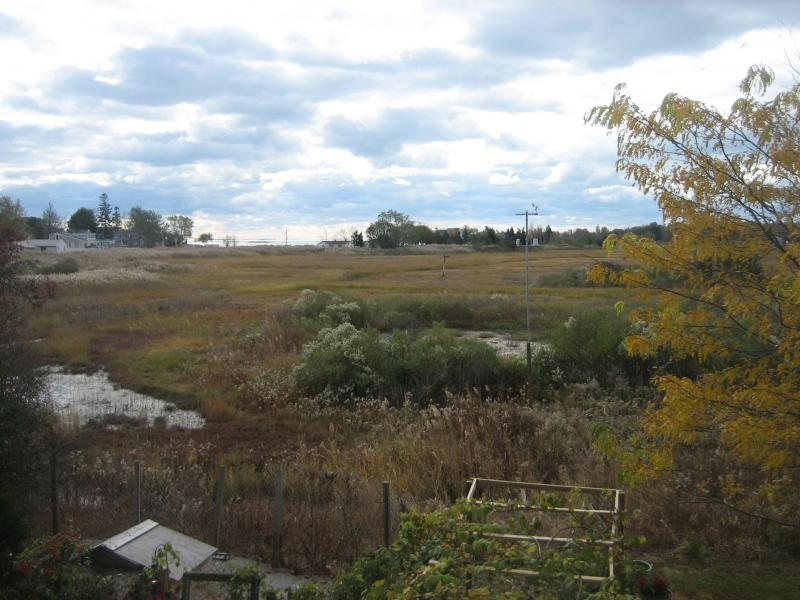 Salt Marsh as seen from the home of Joseph Nugent