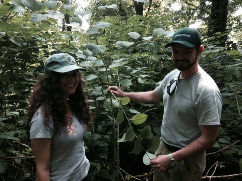 Michelle Spinei and Steve Conaway, standing with Japanese knotweed (Fallopia japonica), which is a spring cooking vegetable. Click photo for a slideshow of other foraging plants