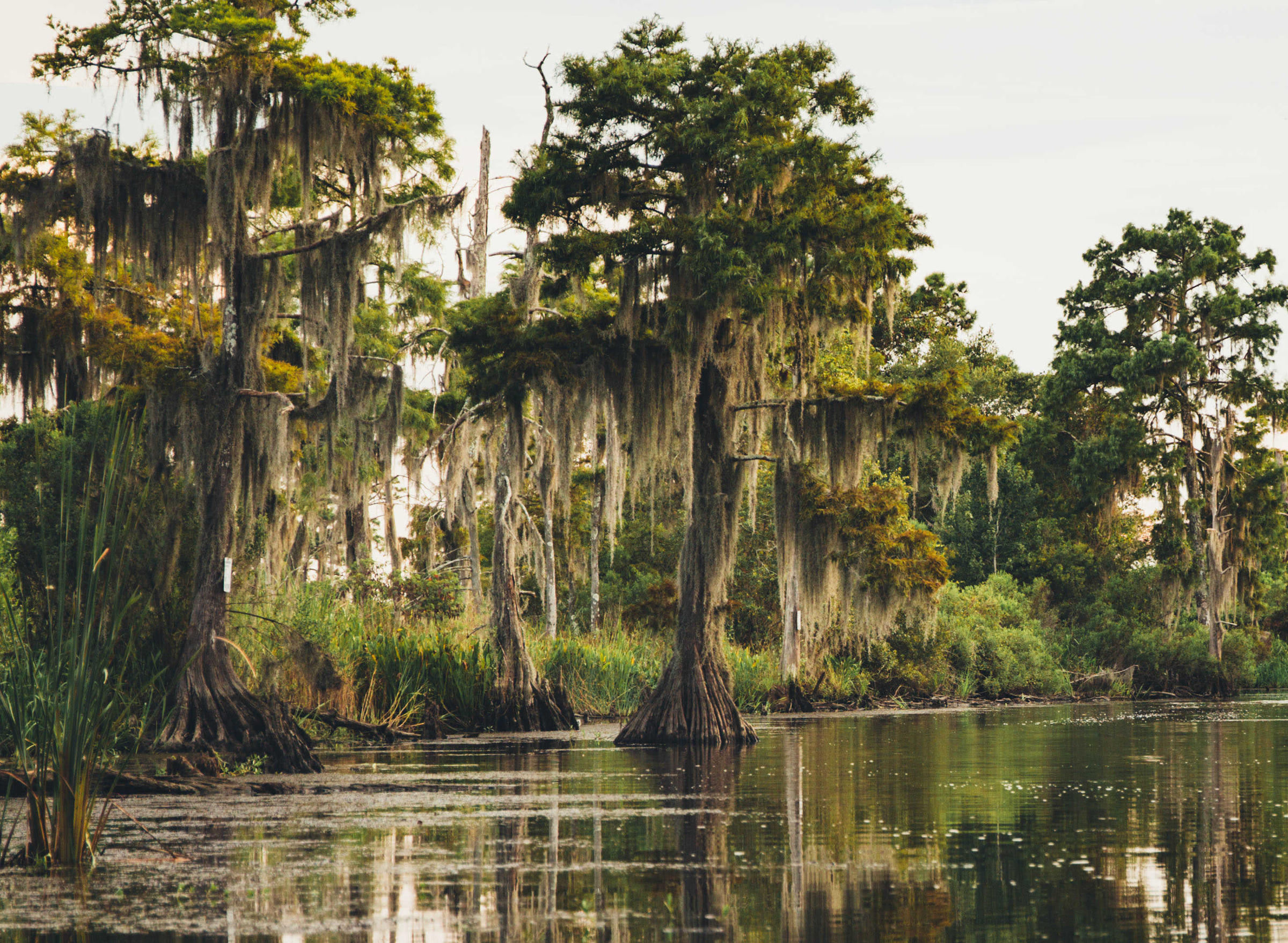 Classical Music Highlight: Down On The Bayou