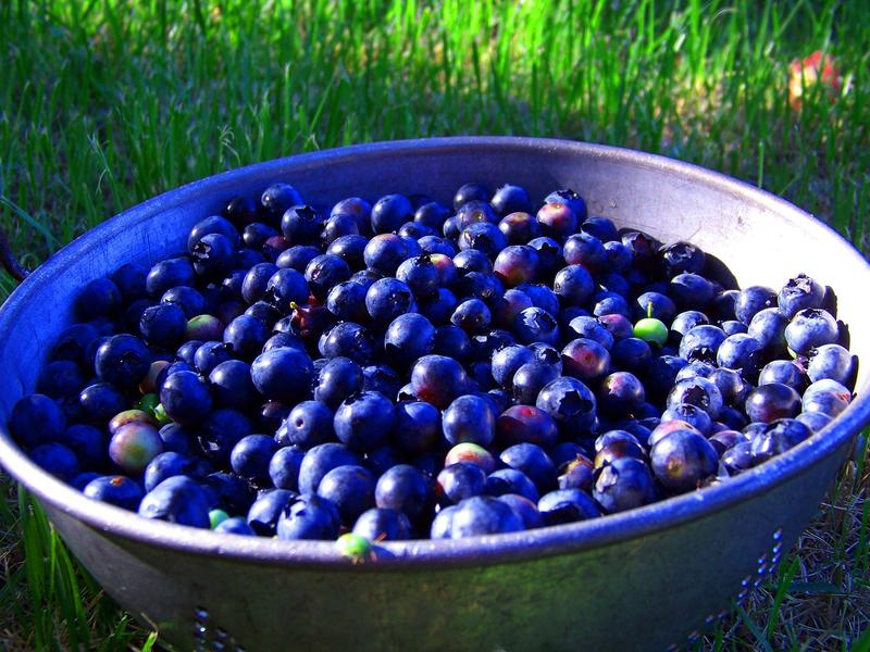 Blueberries grown in southern Illinois, picked at the peak of ripeness.