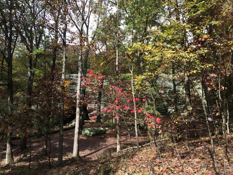Seven Years After The Derecho And The Shawnee Forest Is Still Recovering Wsiu