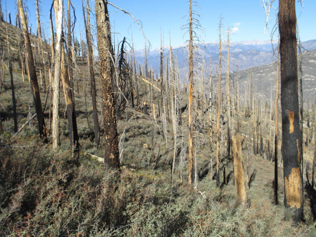 photo of forest post fire