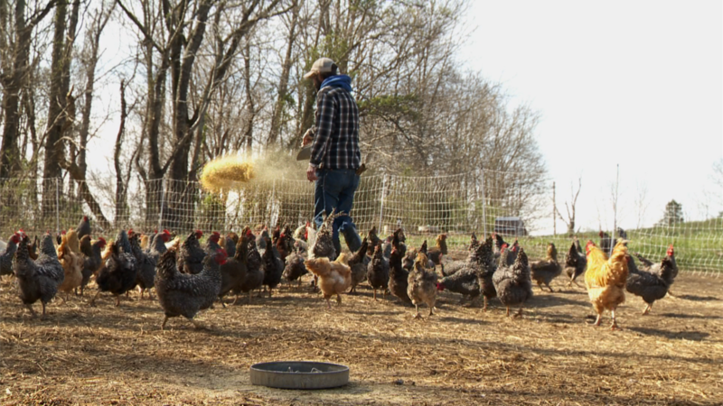 Five Hen Farm