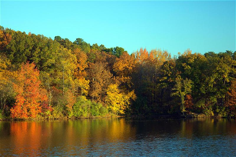 Fall Foliage at Lake Murphysboro State Park.  Photograph taken November, 2014.