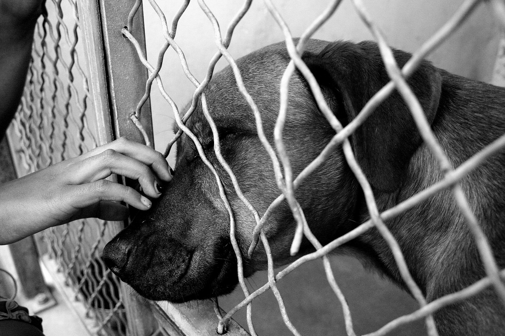 animal shelters The animal defense league is a non-profit organization that is a true no-kill shelter for abandoned, abused, or neglected dogs & cats our mission is to enhance the quality of life for these rescued animals by providing needed.
