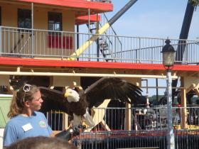 Becky Collier's assistant brings out a bald eagle for schoolkids to see. It's part of the Raptor Trek presentation at the West Alabama Birding Trail Launch September 21.