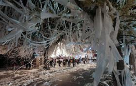 A tentative trial has been set for the man accused of poisoning the Toomer's Oaks at Auburn University.