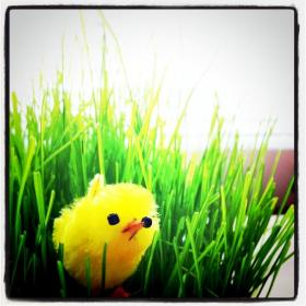 Cute Easter Chick (fake, but cute)!