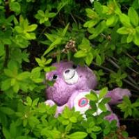 Stuffed toy bear thrown into a bush