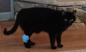 Socrates, pre-surgery (After surgery, he moves too fast to get a good picture!)