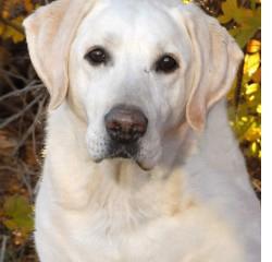 CWD Carlos, Military Dog