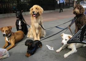 Whoops - dogwalker off-duty - these guys are probably at home with their owners on furlough!