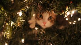 Peek-a-boo Kitty at Christmas