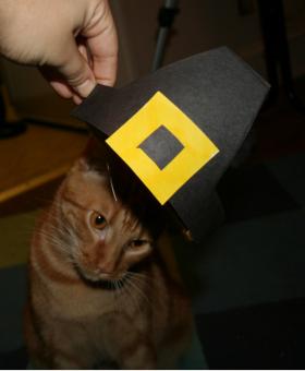 Pilgrim cat?
