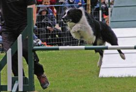 Dog and handler running an agility course
