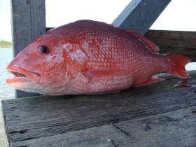 A leader in Alabama's charter fishing business says new federal limits on red snapper will only hurt the state's industry.