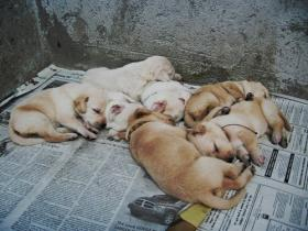 Seven lucky puppies - they're up for adoption!