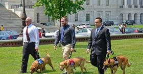 Military Dogs Go to Washington, DC
