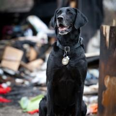 Kai, Arson Dog