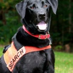 Soot, Search and Rescue Dogs