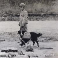 Dog wearing suicide bomb vest, 1943.