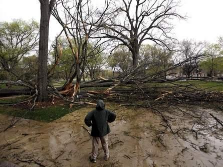 A member of the University of Alabama Grounds Department surveys damage after an oak tree fell in front of Moore Hall on the University of Alabama campus.