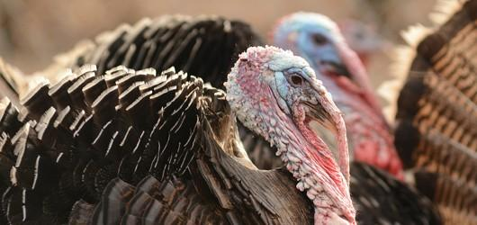 Turkey hunters will be able to hunt during the fall after a state panel reversed its decision.