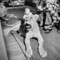 black and white photo of baby sitting on top of a reclining lion