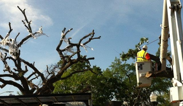 The poisoned oak trees at Toomer's Corner were removed earlier this year.