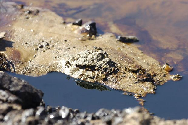 Crude oil seeps into water in an isolated wetland near Aliceville, Ala., on Wednesday, March 5, 2014.  (AP Photo/Jay Reeves)